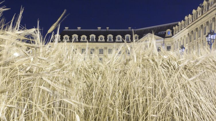 """""""Ble Vendôme"""", Installation de Gad Weil sur la Place Vendôme, 1er juillet 2016  (GEOFFROY VAN DER HASSELT / AFP)"""