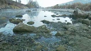 Des poissons gisent sur le lit du Doubs asséché. (FRANCE 3)