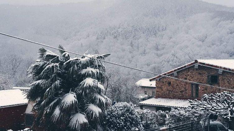Un palmier est recouvert de neige, le 30 mars 2020, dans une commune de l'Ariège. (@Oblomovchtchina / TWITTER)