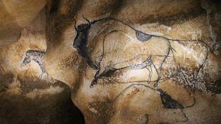 Les Aurignaciens ont utilisé le relief de la grotte de façon exceptionnelle pour dessiner et donner de la vie à leurs animaux. Les détails des panneaux ornés sont reproduits au millimètre près par les artisans. (JEROMINE SANTO GAMMAIRE / FRANCETV INFO )