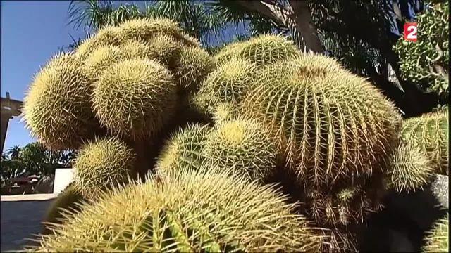 L'extraordinaire collection de cactus du jardin exotique de Monaco
