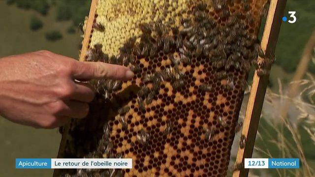 Espèce en voie de disparition : les apiculteurs de Savoie veulent sauver l'abeille noire