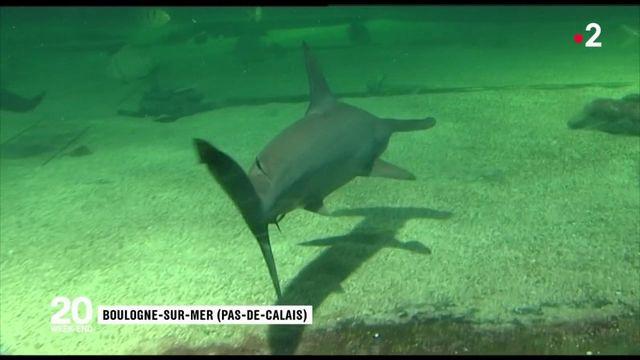 Requins-marteaux : hécatombe dans un parc aquatique