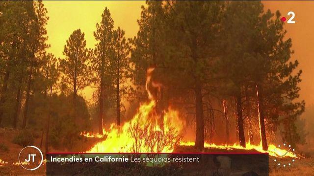 États-Unis : des séquoias géants en proie à des incendies en Californie
