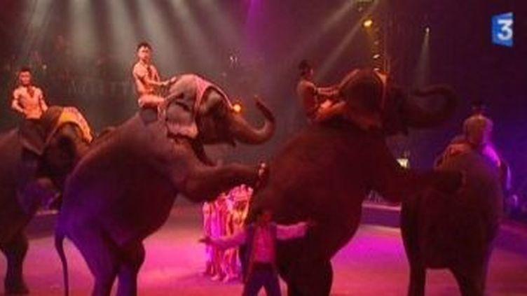 Le cirque Arlette Gruss fête ses 25 ans  (Culturebox)