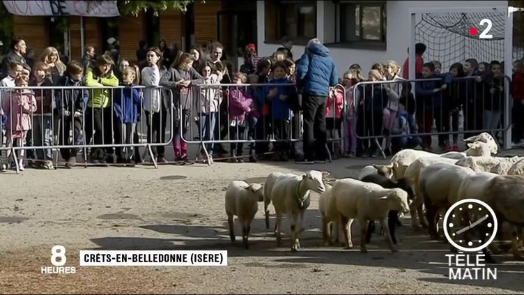Des moutons dans la cour de l'école. (France 2)