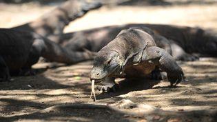 """Les célèbres dragons de Komodo, dont les conditions de vie sont menacées par le changement climatique, ont été classés """"en danger"""" sur la Liste rouge de l'UICN. (ZULKARNAIN / XINHUA / MAXPPP)"""