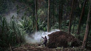 Un charbonnier dans la forêtdu parc national des Virunga, en République démocratique du Congo, le 28 septembre 2019. (ALEXIS HUGUET / AFP)