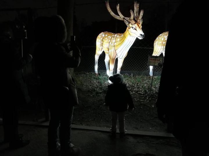 """Franc succès pour l'exposition """"Espèces en voie d'illumination"""" au Jardin des Plantes, à Paris (SARAH NEDJAR / FRANCE-INFO)"""