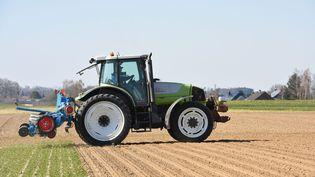 Le gouvernement adécidé d'autoriser à nouveau les insecticides néonicotinoïdes pour soutenir les producteurs de betteraves qui souffrent des attaques de pucerons (photo d'illustration). (JEAN-LUC FLEMAL / MAXPPP)