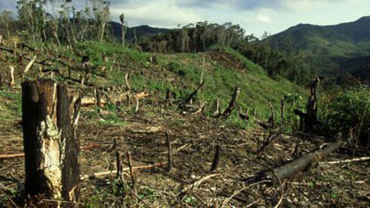 80% de la forêt originelle a disparu à Madagascar. (Madaplus info)