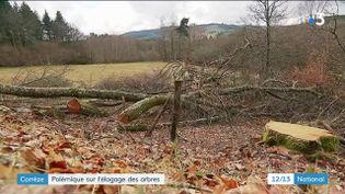 10 000 arbres ont été abattus en quelques semaines en Corrèze à la suite d'une campagne d'élagage lancée par le Conseil Départemental. Les habitants dénoncent le massacre du paysage.  (FRANCE 3)