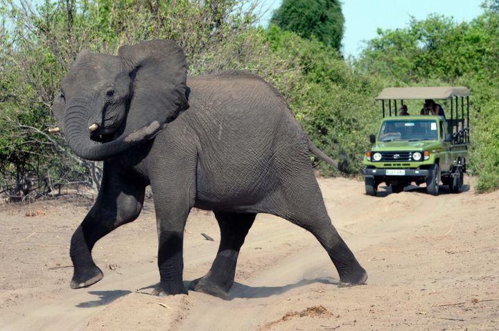 Un éléphant au Chobe National Park à Kasane (Botswana), le 13 novembre 2010. (THOMAS SCHULZE / MAXPPP)