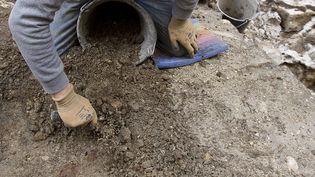 Un vigneron condamné pour fouille archéologique illégale  (SIPA)