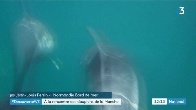 Les dauphins s'épanouissent au large des côtes normandes