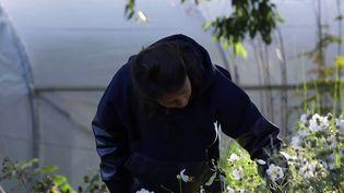 Depuis cinq ans, une jardinière érudite fait pousser, sur un petit bout de champ, plus de 200 variétés de fleurs. (CAPTURE D'ÉCRAN FRANCE 3)