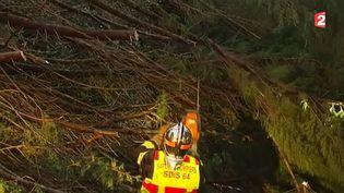 Un pompier tronçonne un arbre tombé à cause des rafales de vent, dans les Pyrénées-atlantiques, le 30 janvier 2015. ( FRANCE 2)