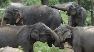 Des éléphants dans le refuge de Pinnawala au Sri Lanka, le 11 août 2020. (LAKRUWAN WANNIARACHCHI / AFP)