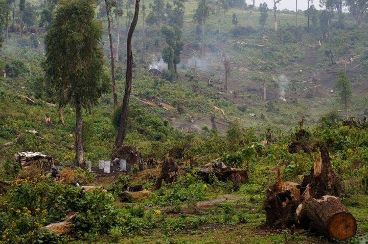 Exemple de déforestation dans la forêt tropicale de Kitchanga en République démocratique du Congo, près de Masisi (province du Nord-Kivu), où, depuis longtemps, les arbres sont abattus de manière anarchique afin de les transformer en charbon (16 juillet 2012). (PHIL MOORE / AFP)