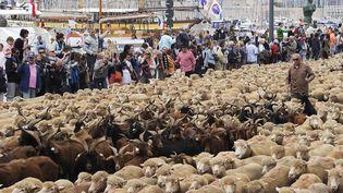 Des animaux parcourent le centre de Marseille, capitale européenne de la culture, le 9 juin 2013. (BORIS HORVAT / AFP)