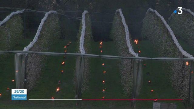 Corrèze : face à la chute des températures, les arboriculteurs mobilisés pour sauver leurs cultures