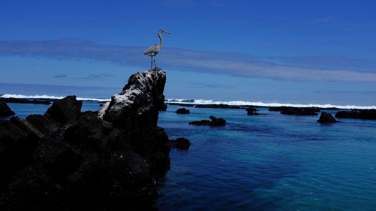 L'archipel des Galapagos,situé dans l'Est de l'océan Pacifique et à la latitude de l'équateur,le 11 octobre 2016. (NACHO DOCE / REUTERS)