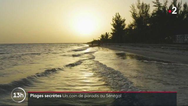 Sénégal : au bout de la mangrove, un paradis caché de sable blanc