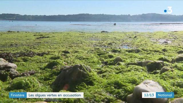 Finistère : les algues vertes dangereuses pour la santé ?