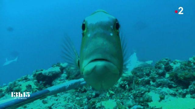 """VIDEO. Nouvelle-Calédonie : la technique de l'""""ADN environnemental"""" au secours de la biodiversité sous-marine"""