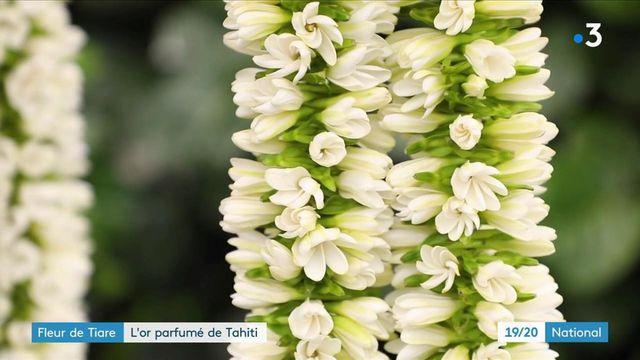 Tahiti : la fleur de Tiaré, l'or parfumé de la Polynésie