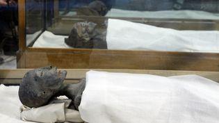 La momie de la mère de Toutankhamon, lors d'une exposition au musée du Caire (Egypte), le 17 février 2010. (CORTESÍA / NOTIMEX / AFP)