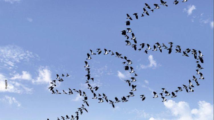 Un tiers des oiseaux a disparu en France en 15 ans à peine. Ils n'ont pas le temps de s'adapter aux changements que l'homme leur inflige. (LIGUE DE PROTECTION DES OISEAUX)