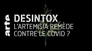Non, l'artemisia n'a pas été reconnu comme remède contre le Covid par l'OMS (ARTE/2P2L)