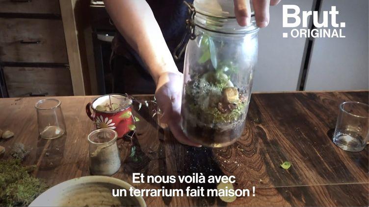 VIDEO. Tuto : Comment fabriquer un terrarium (BRUT)