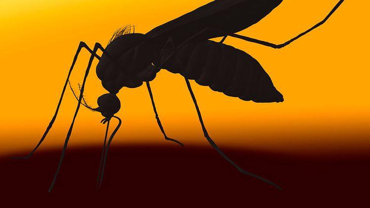 Le virus de la dengue a déjà contaminé 16 nouvelles personnes à Mayotte depuis le début du mois de janvier. (UNIVERSAL IMAGES GROUP VIA GETTY)