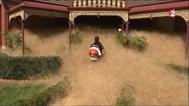 Australie : une ville envahie par des herbes sèches