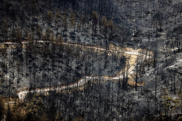 Une forêt ravagée par le feu, dans la provinced'Antalya, dans le sud de la Turquie, le 1er août 2021. (MUSTAFA CIFTCI / ANADOLU AGENCY / AFP)