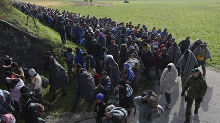 Un groupe de migrants près de Dobova (Slovénie) le 20 octobre 2015 (REUTERS - Srdjan Zivulovic)