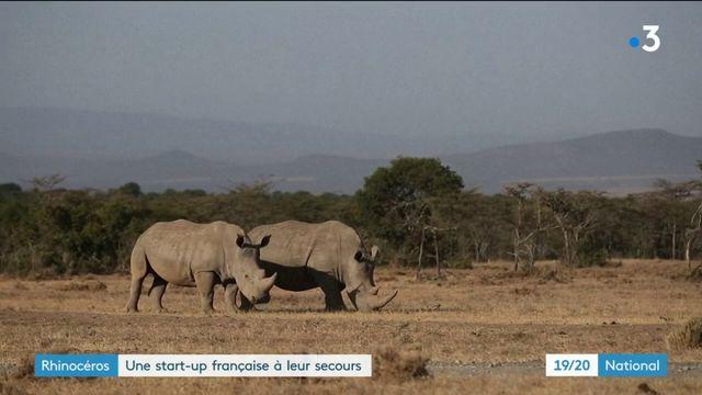 Rhinocéros : une start-up française à leur secours