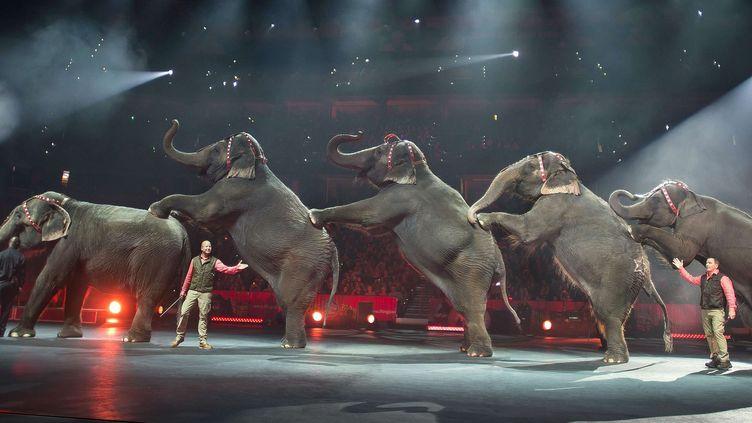 """Les numéros d'éléphants faisaient la spécificité du """"Ringling Bros. and Barnum and Bailey Circus"""", ici en 2015.  (Gary Bogdon/AP/SIPA)"""