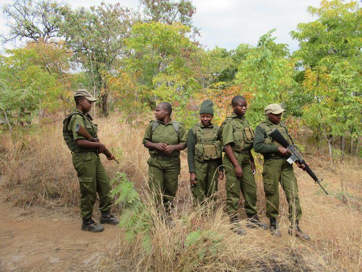 Unité, entièrement composée de femmes, chargée de lutter contre les braconneurs dans le Phundundu Wildlife Park (nord du Zimbabwe) le 21 juin 2018. (KATE BARTLETT / DPA)