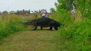 Un alligator filmé dans une réserve naturelle à Lakeland, en Floride, le 16 janvier 2017. (KIM JOINER / FACEBOOK)