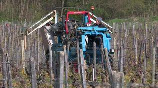 A Clessé, des viticulteurs aspergent des infusions de tisane sur les pieds des vignes pour lutter contre le gel. (D. Sega / France Télévisions)