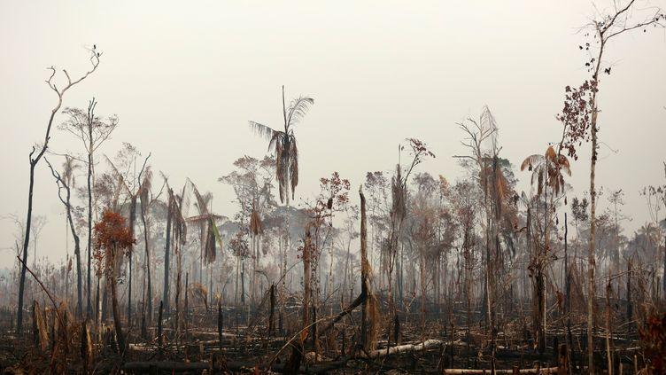 Un pan de la forêt amazonienne dévasté par les flammes à Boca do Acre, au Brésil, le 24 août 2019. (BRUNO KELLY / REUTERS)