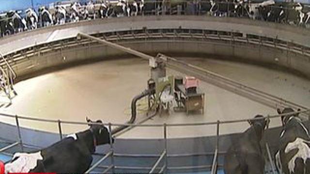L'élevage allemand plus productif et compétitif qu'en France