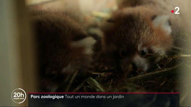 Belgique : le parc zoologique Pairi Daiza, une référence en la matière