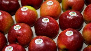 Des pommes bio dans une coopérative de Saint-Yrieix-la-Perche (Haute-Vienne), le 21 décembre 2018. (THOMAS SAMSON / AFP)