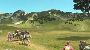 Certains randonneurs choissent de partir en bivouac à dos d'âne. Immersion dans les hauts plateaux du Vercors. (FRANCE 2)