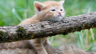 En juillet 2015,2623 animaux ont été abandonnés en France, indique la SPA. (BRUNO MATHIEU / BIOSPHOTO / AFP)