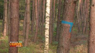 Avenue de l'Europe. Pour compenser les effets de sa dépendance au charbon, la Pologne teste les puits de carbone (FRANCE 3 / FRANCETV INFO)